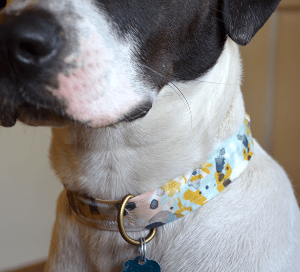 Custom dog collar made from 1 fat-quarter of Basic Cotton Ultra from the Spoonflower Marketplace.
